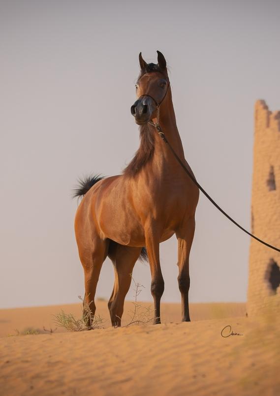 Dinda Al Zobair